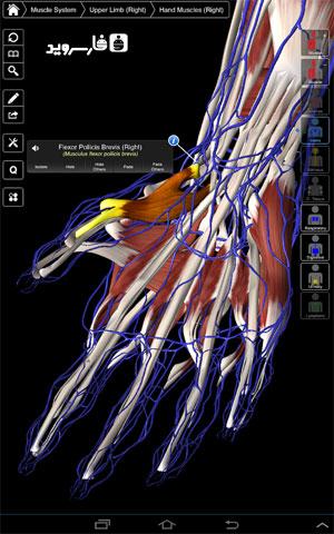 نرم افزار آناتومی جامع اندروید - Essential Anatomy 3 Android