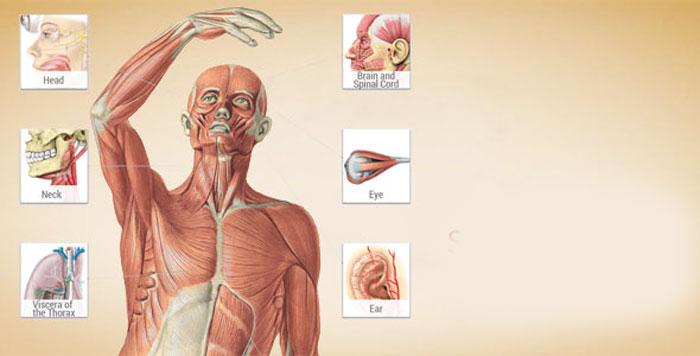 دانلود Sobotta Anatomy Atlas - برنامه عالی آناتومی بدن انسان اندروید + دیتابیس